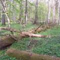 1200px-Białowieski_Park_Narodowy_03